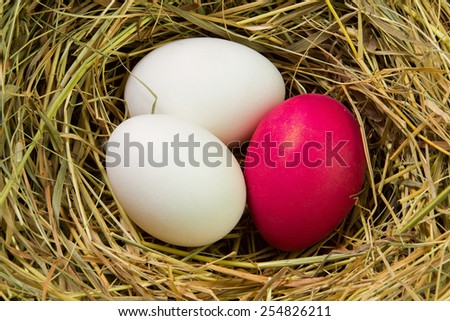 Easter egg painted red in a nest of straw - stock photo
