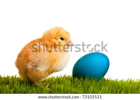 Easter eggs and chickens on green grass on white isolated background - stock photo