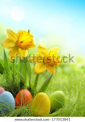 Easter eggs and daffodil flower on meadow - stock photo
