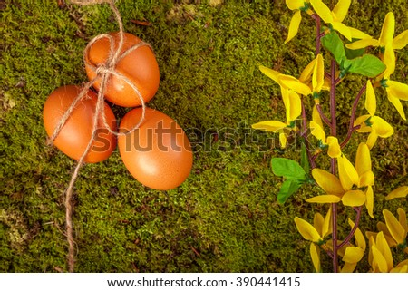 Easter eggs and decoration on green moss background