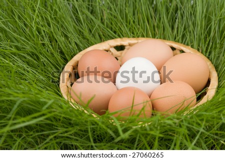 Easter eggs in a basket on a grass(natural).