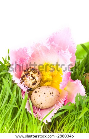 Easter eggs in flower of pink tulip - stock photo