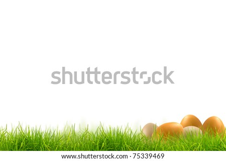 Easter eggs in Fresh spring green grass panorama isolated on white background. - stock photo