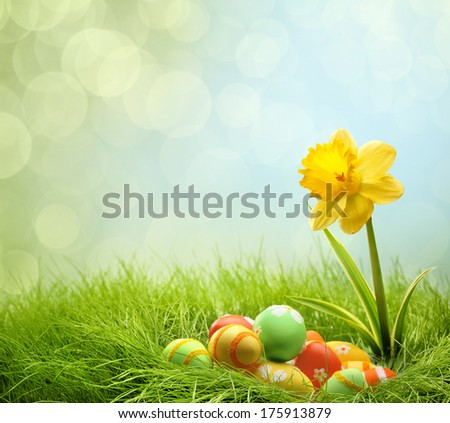 Easter eggs on green grass with daffodil flower - stock photo