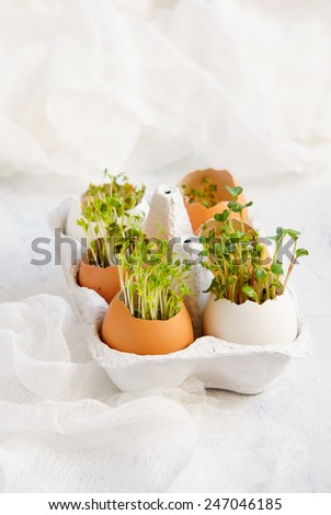 Easter eggs - watercress salad and in eggshells - stock photo