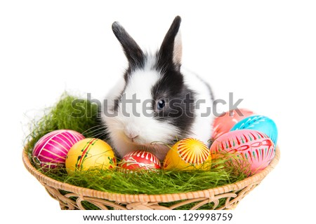 Easter greeting card with easter bunny, grass and eggs in nest, isolated on white background - stock photo