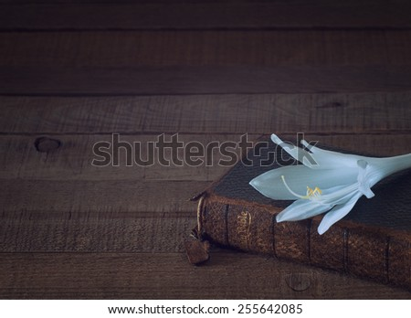 Easter Hosta Lily with an Antique Bible in lower corner on Rustic Dark Wood Board Background with blank empty room or space for copy, text, your words.  Horizontal cross process low key for mood - stock photo