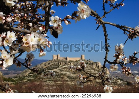 Easter in Spain - Closeup on almond flowers and Spanish castle on background. Location: Castalla (Alicante - Spain)