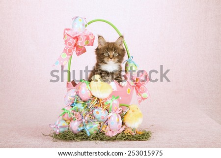 Easter kitten sitting inside egg shape basket with easter eggs and easter chicken on pink background - stock photo