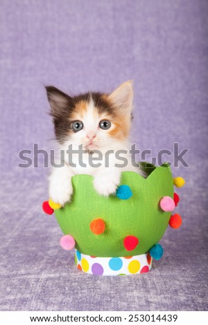 Easter kitten sitting inside large green Easter egg on light purple background  - stock photo
