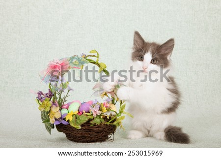 Easter kitten sitting next to Easter basket filled with Easter eggs on light green background  - stock photo