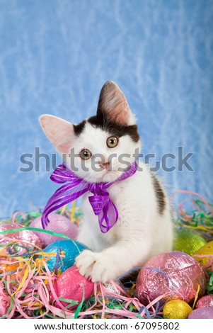 Easter kitten with easter eggs on blue background