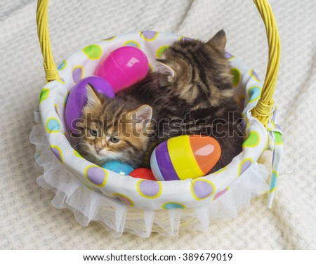 Easter kittens sitting in a basket with colorful easter eggs - stock photo