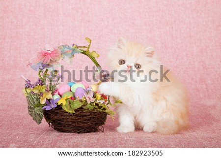Easter Persian kitten with floral Easter egg nest basket on pink background  - stock photo
