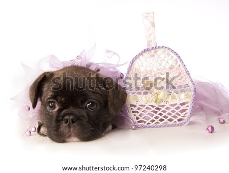 Easter puppy in lavender with basket isolated - stock photo
