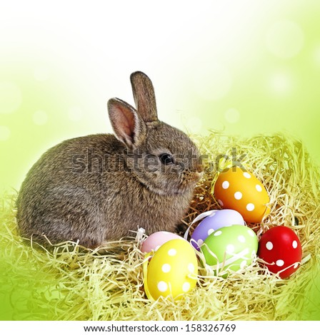 easter rabbit and easter eggs - white background - stock photo