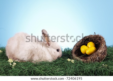 Easter Rabbit and eggs! Holiday animal concept