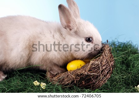 Easter Rabbit! Holiday animal concept