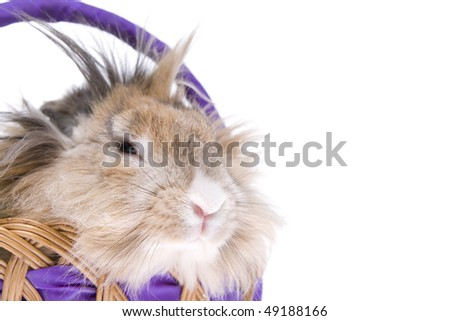 Easter rabbit in basket