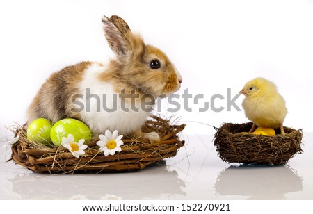 Easter, rabbits, rabbit, chicken, eggs, easter card - stock photo