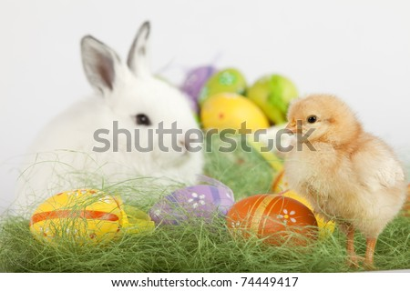 Easter set up with one red baby chicken, many painted eggs and one cute white bunny. Focus is on the chick. High resolution image taken in studio. - stock photo