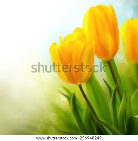 Easter Spring Flowers bunch. Beautiful yellow tulips bouquet. Elegant Mother's Day gift over nature green blurred background. Springtime.  - stock photo