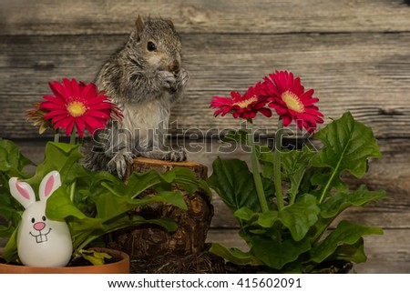 Easter Squirrel  - stock photo