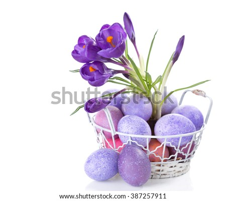 Easter still life with colored eggs and flowers (Crocus) isolated on white background. - stock photo