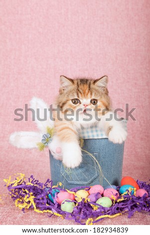 Easter theme kitten sitting in denim jean tube with fluffy Easter bunny, easter eggs on pink background - stock photo