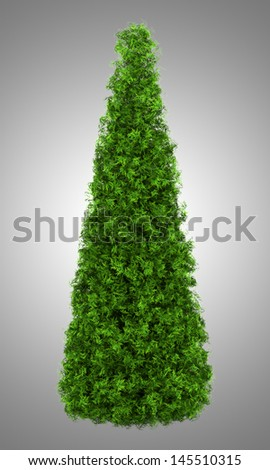 eastern arborvitae bush isolated on gray background - stock photo
