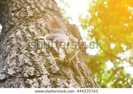 Eastern grey squirrel sitting on branch eating a peanut, selective focus - stock photo