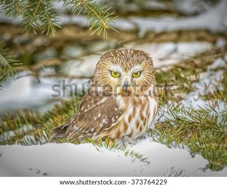 Eastern screech owl in winter.Digital oil painting - stock photo