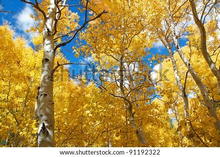 Eastern Sierra mountain range in full autumn colors - stock photo