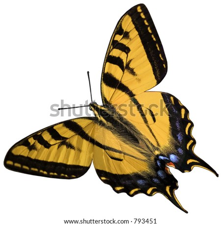 Swallow-tail Stock Photos, Swallow-tail Stock Photography, Swallow
