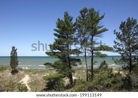 Eastern White Pines (Pinus strobus) on Sand Dune Ridge Overlooking Lake Huron - stock photo