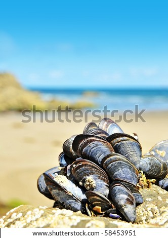 eatable mussels on a beach and sea - stock photo