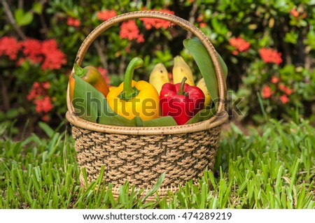 Eating fresh fruits and vegetables in the basket, leisure, natural backdrop.