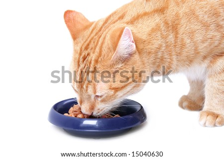 eating ginger cat - stock photo