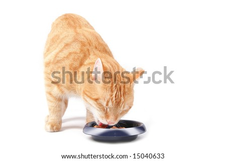 eating ginger cat - stock photo