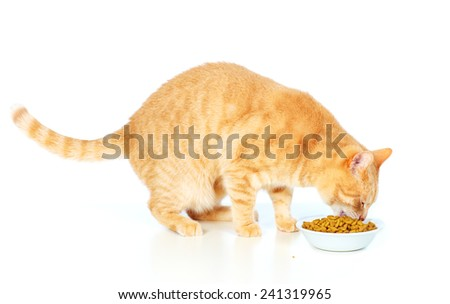 Eating red cat isolated on white background - stock photo