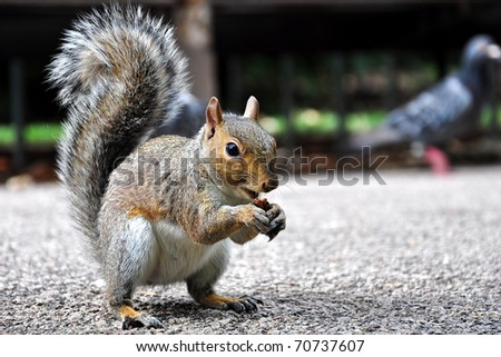 Eating squirrel - stock photo
