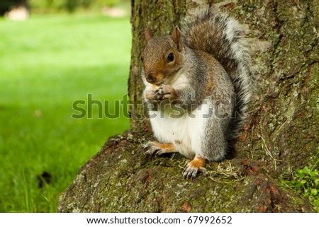 Eating squirrel sitting on the grass