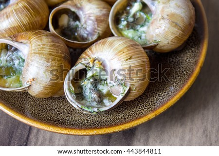 Eating the fried snails in garlic butter - stock photo