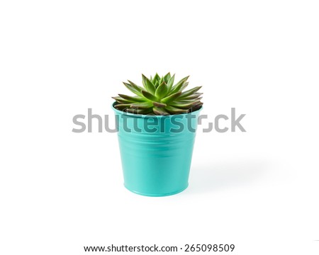 echeveria succulent plant in vivid mint pot on white background with shadow - stock photo