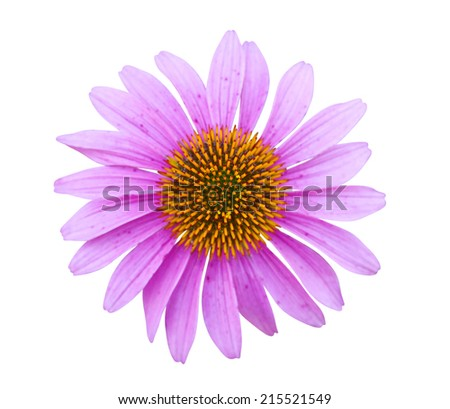 echinacea flower (coneflower) on a white background