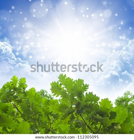 Eco background - green oak tree leaves, bright sun, white clouds