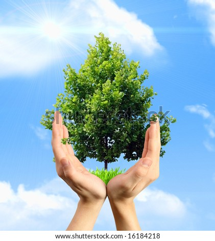 Eco concept - hands holding a tree against a blue sky - stock photo