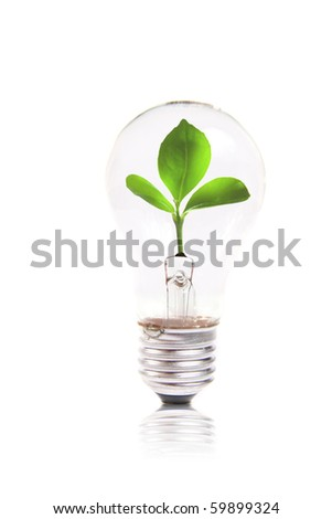 eco concept: lightbulb with green plant inside - stock photo