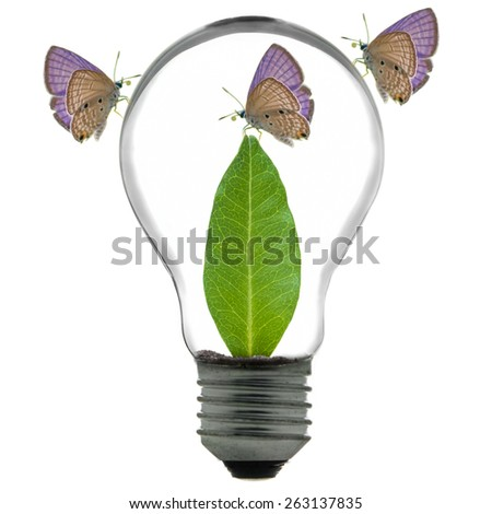Eco concept, tree growing inside the light bulb and butterfly - stock photo