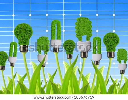 eco energy bulbs on the background solar panel - stock photo